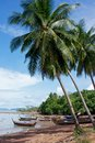 Fishing Boats Under Palmtrees Royalty Free Stock Images - 25030769