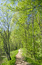 Path In Summer Forest Stock Photo - 25031490