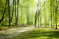 Green Park In Sunny Morning Stock Image - 25047291