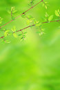 Springtime Background With Green Leaves Royalty Free Stock Images - 25057709