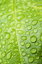 Water Droplets Royalty Free Stock Image - 25058976
