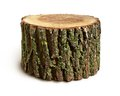 Stump Isolated Royalty Free Stock Photography - 25059517