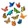 Flying  Butterflies Royalty Free Stock Photos - 25081028