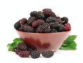 Sweet Mulberry Royalty Free Stock Photography - 25081687