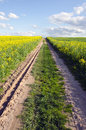 Farm Road In The Spring Rapes Field Royalty Free Stock Photo - 25095365