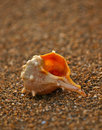 Shell On Sand Beach 2 Stock Image - 25103571