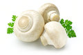 White Mushroom Royalty Free Stock Image - 25130126