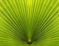 Palm Leaf Closeup With Symmetry And Lines Royalty Free Stock Image - 25138586