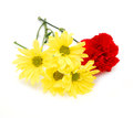 Carnations And Daisy Flower Royalty Free Stock Photos - 25140298