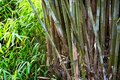 Bamboo Royalty Free Stock Images - 25141339
