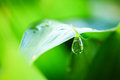 Water Drops On Fresh Green Leaf Royalty Free Stock Photography - 25151377