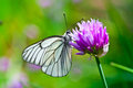 Beautiful Butterfly On Summer Lilac Flowers Stock Image - 25152171