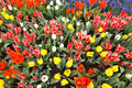 Garden Filled With Colorful Tulips In Springtime Royalty Free Stock Images - 25157149