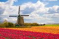 Windmill With Tulip Field Royalty Free Stock Photos - 25167578