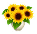 Bouquet Of Sunflowers In Vase Royalty Free Stock Photography - 25171757