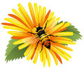 Bee On A Yellow Daisy Royalty Free Stock Images - 25173189