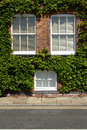 Ivy Windows. Stock Photography - 25174422