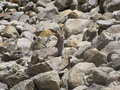 A Camouflaged Himalayan Blue Sheep Stock Photos - 25193843