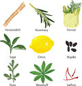 Set Of Different Spices Royalty Free Stock Images - 25194209