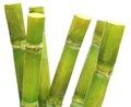 Sugar Cane Stock Photography - 25194282