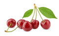 Sweet Cherry Berry Fruit Royalty Free Stock Images - 25194609