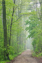 Spring Forest With Trail Stock Image - 25198851