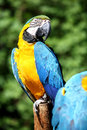 Macaw Stock Photography - 2522752
