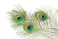 Peacock Feather Stock Images - 25214264