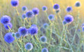 Thistle Close-up Stock Image - 25239761