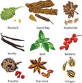 Set Of Different Spices Stock Photography - 25252402