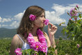Beautiful Girl Smelling A Rose In A Rose Field Royalty Free Stock Image - 25288366