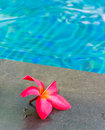 Pool And Flower Royalty Free Stock Photography - 25294977