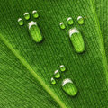Water Footprints On Leaf Stock Photos - 25299903