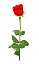 Red Rose Stock Image - 25334101