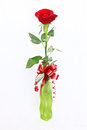 Red Rose In A Vase Stock Photography - 25336802