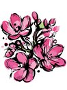 Pink Sketch Of Spring Colors Three Buds Royalty Free Stock Images - 25356109