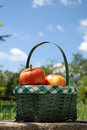 Picnic In The Park Stock Images - 2542834