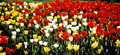 Colorful Spring Tulips Stock Photos - 2545613