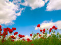 Poppy Field Stock Images - 2547294