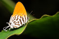 Orange Butterfly Stock Photos - 25404933