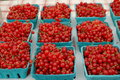Red Currants Stock Photos - 25410063