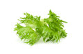 Leaf Of Fresh Salad Royalty Free Stock Images - 25412839