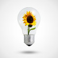 Eco Concept: Light Bulbs With Sunflower Inside Royalty Free Stock Photography - 25426397