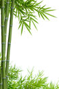 Bamboo With Leaves Royalty Free Stock Image - 25428266