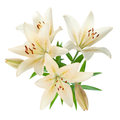 White Lily Bouquet Royalty Free Stock Photo - 25437095