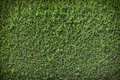 Green Wall Background Stock Photos - 25440883