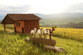 Three Goats, Small Farm In Swiss Alps Stock Images - 25445234