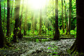 Swamp In A Forest Royalty Free Stock Image - 25446686