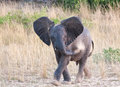 Small Elephant Throwing Sand On His Body Stock Photo - 25451350