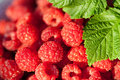 Closeup Sweet Raspberries Royalty Free Stock Images - 25477509